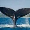Kiállításokon készült képek - last post by Whale